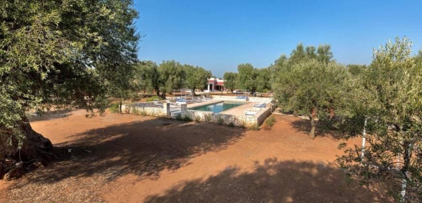 Ostuni tra gli ulivi secolari splendido podere con piscina